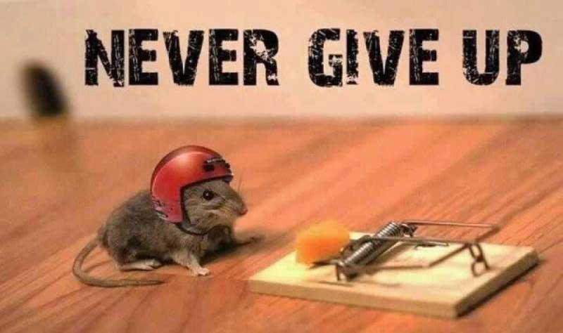 Para aprender inglês sozinho você não deve desistir