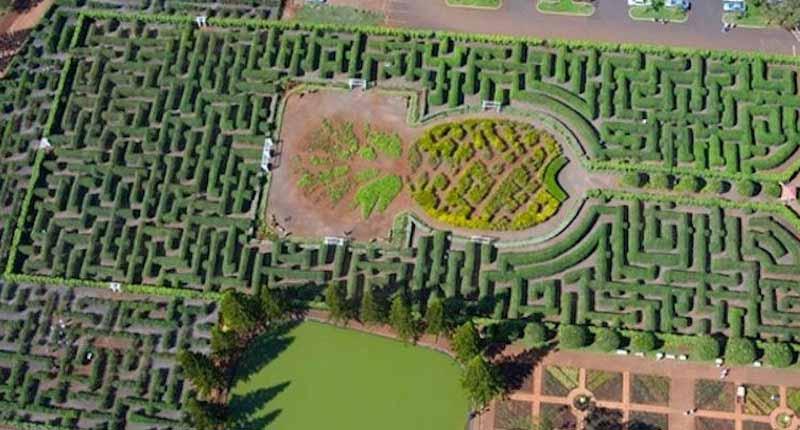 Labirinto de Abacaxi