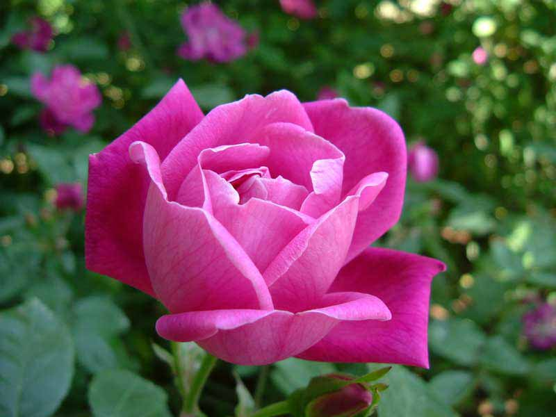 Nome das flores em ingles