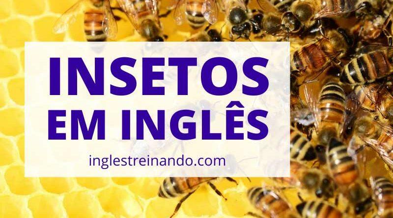 Principais Insetos em Inglês