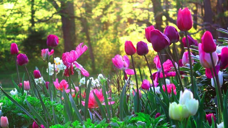 Jardim em inglês - nomes de flores em inglês
